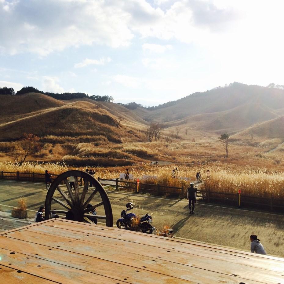 神河町の砥峰高原です。黄金色のススキが綺麗でした。